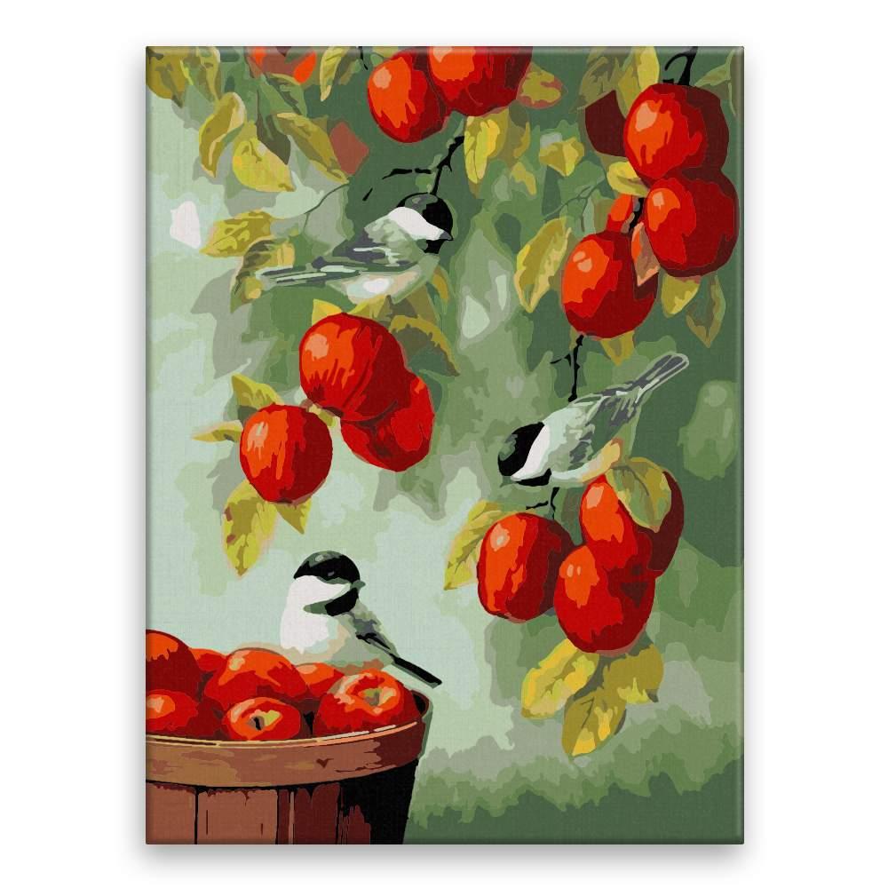 Malování podle čísel Ptáčci a jablíčka
