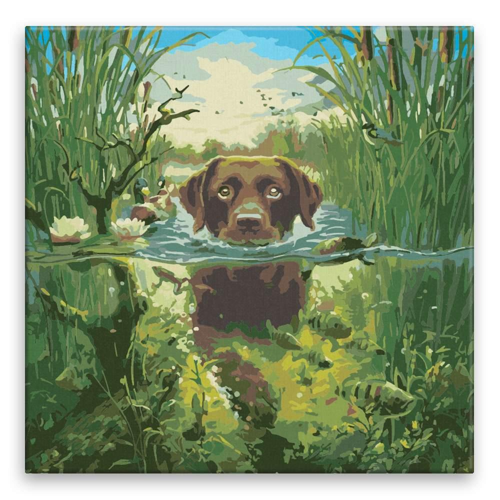 Malování podle čísel Pes v řece