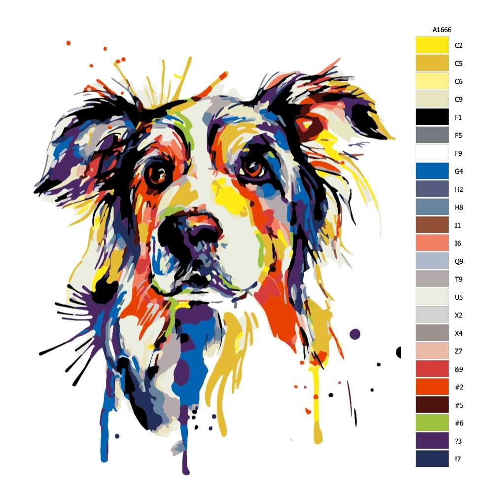 Malování podle čísel Border kolie v barvách