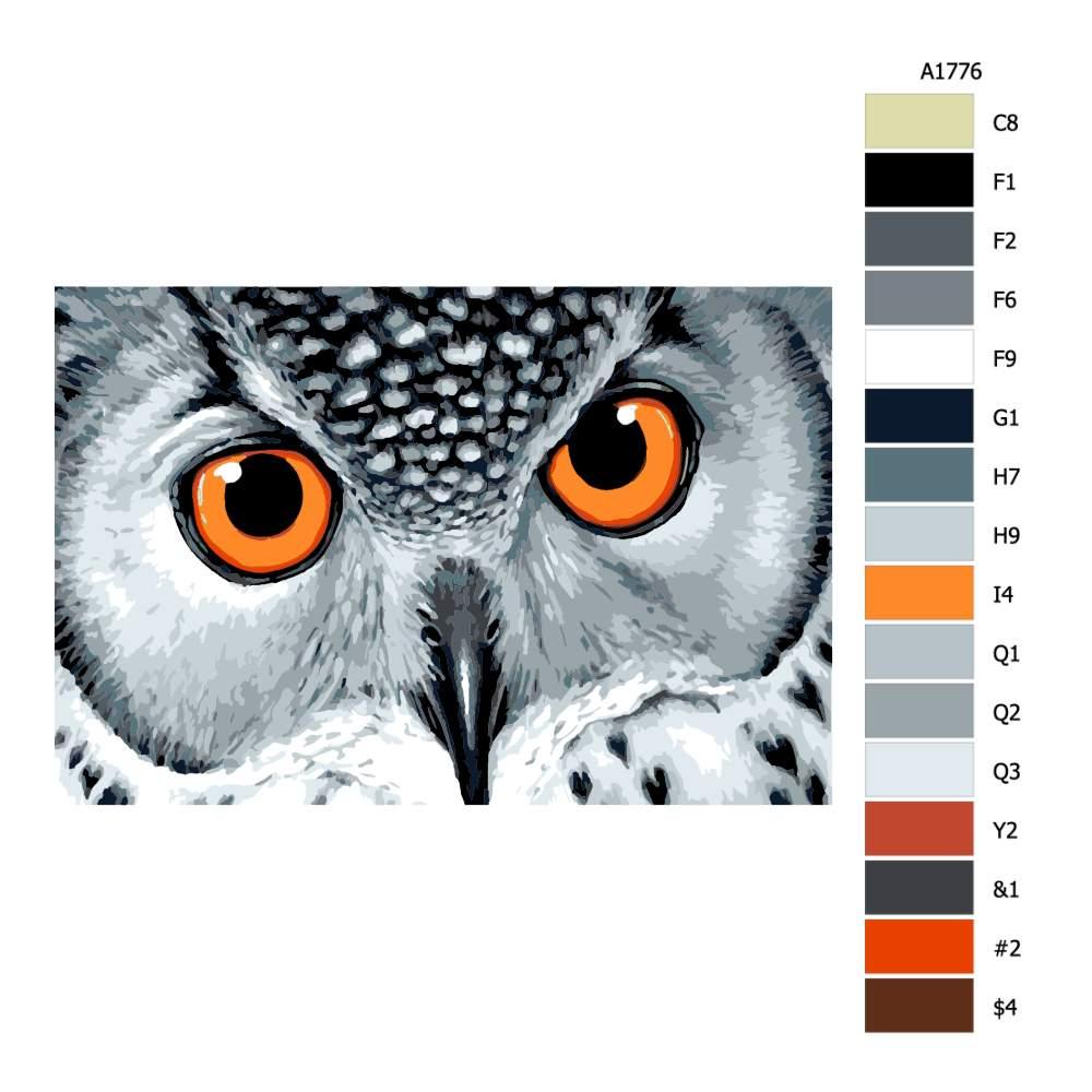 Návod pro malování podle čísel Oranžové oči sovy