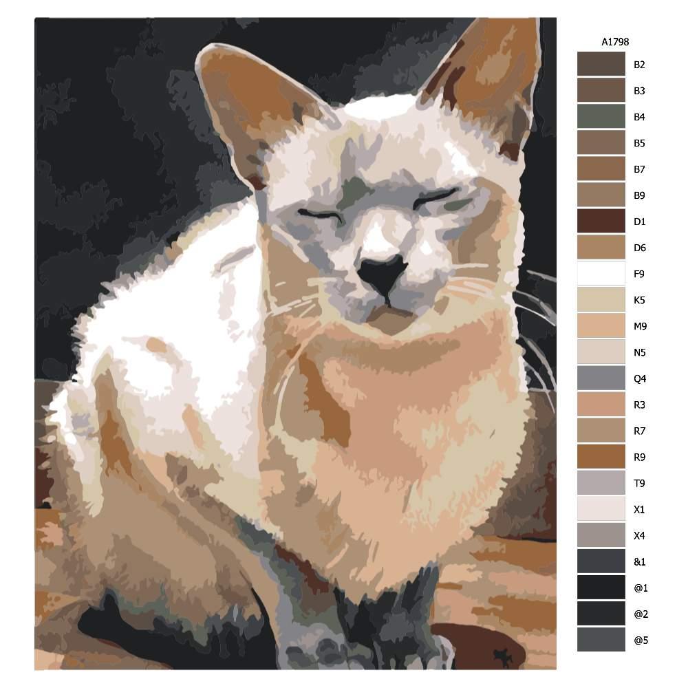 Malování podle čísel Spící kočka