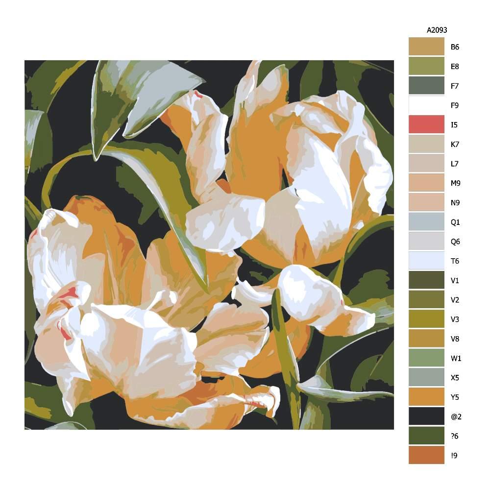 Návod pro malování podle čísel Dva okrakrasné tulipány v odkvětu